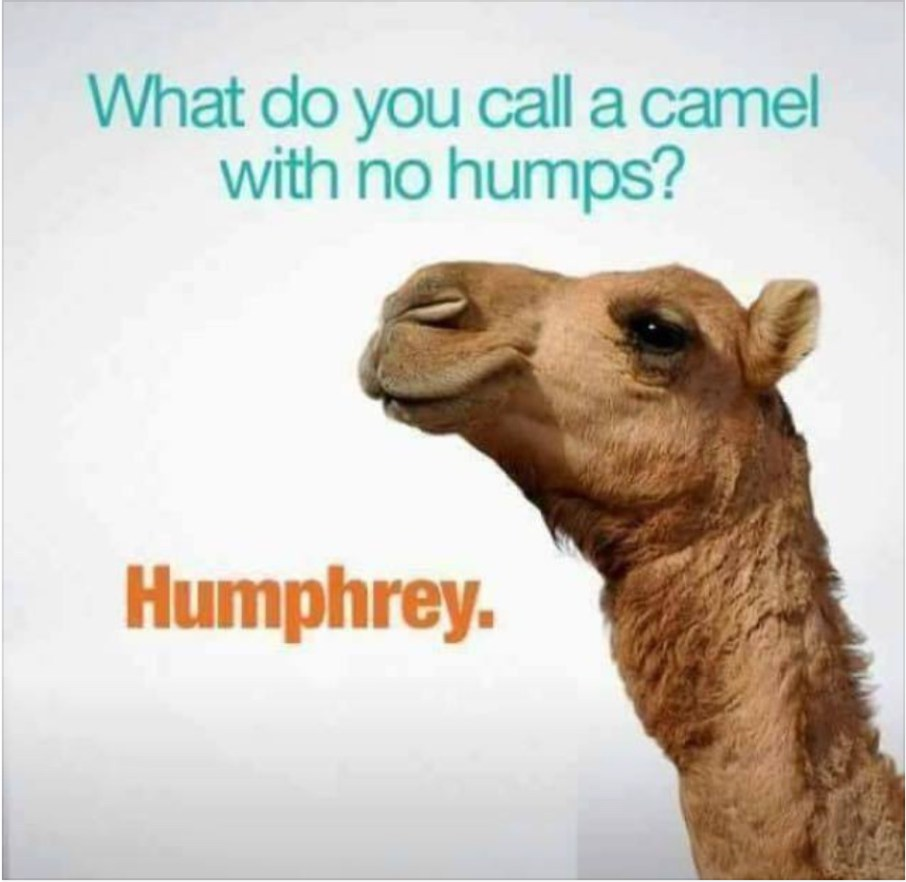 Top 18 #hump #day #memes