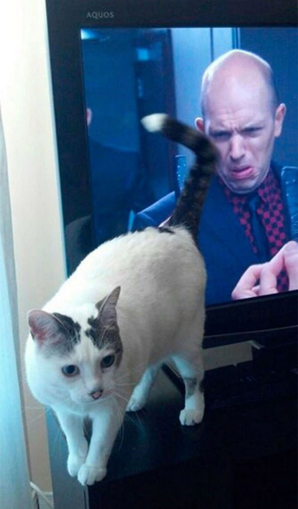 Best 26 humor pictures perfectly timed photo
