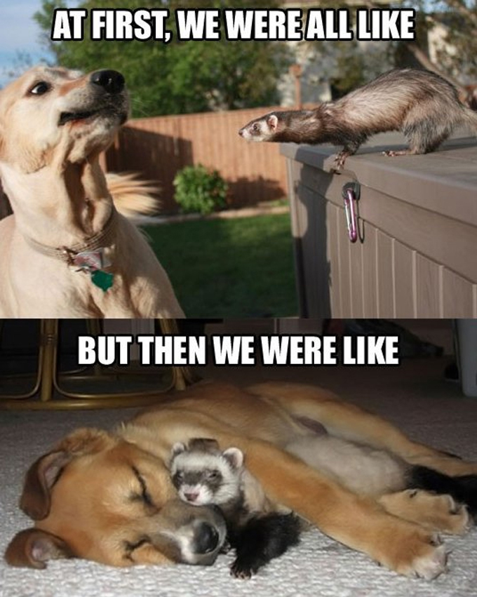26 Funny Memes Animals And Pets
