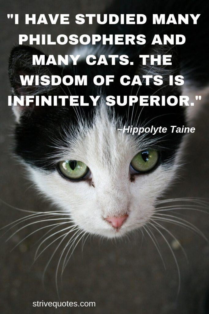 25 Funny Quotes Cats