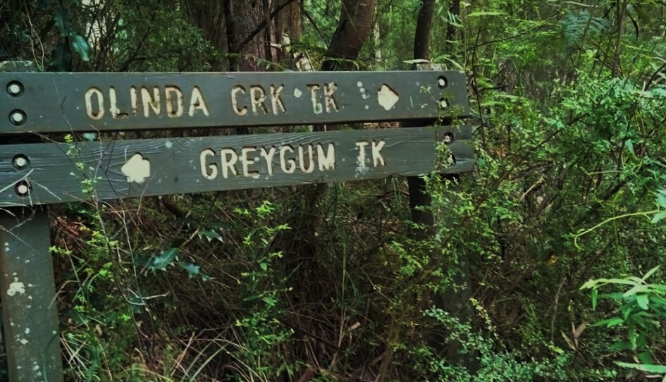 Olinda Creek Trail