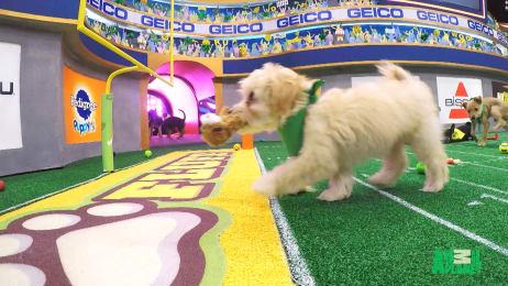 Puppy Bowl .Com