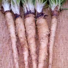 Where to buy salsify